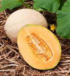 Melon - HALES BEST JUMBO